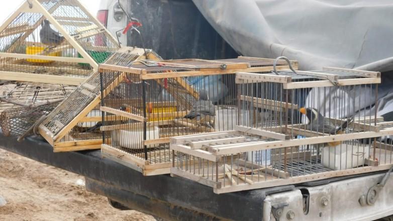 Realizaron un nuevo operativo contra la captura y tráfico de aves