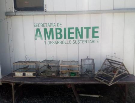 En operativos de ruta, Ambiente secuestró aves autóctonas