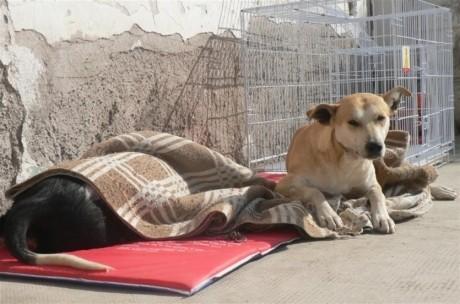 Programa de Esterilización de Mascotas: el quirófano funcionará en Rawson