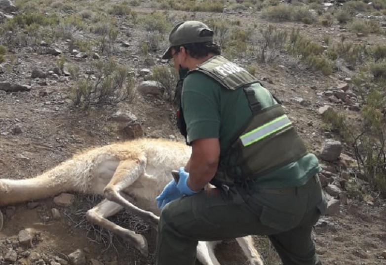 Quién es el empleado de Ambiente detenido por cazar en una reserva de Ullum