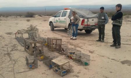 Ambiente liberó un centenar de aves que estaban en cautiverio