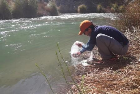 Ambiente sembró cuatro mil truchas en el río Jáchal