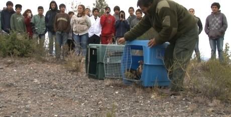 Ambiente celebró el día del animal con una liberación de aves silvestres