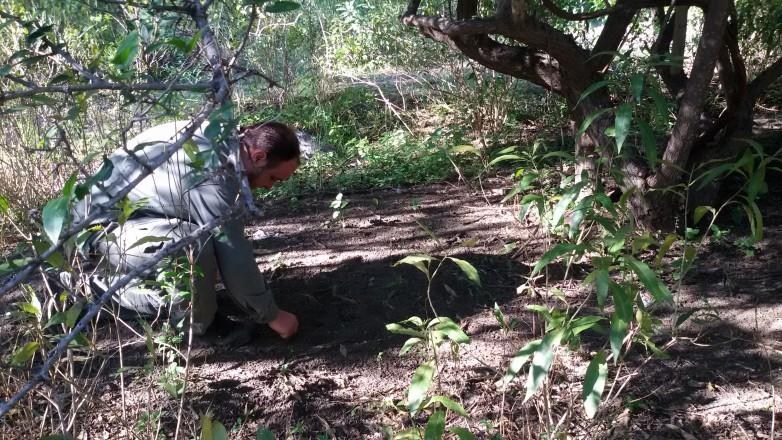 Ambiente comenzó con la recolección de semillas para el vivero de nativas
