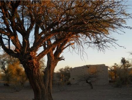 Ambiente junto a comunidades originarias sigue trabajando en conservación de bosques