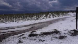 Está vigente el seguro contra inclemencias climáticas