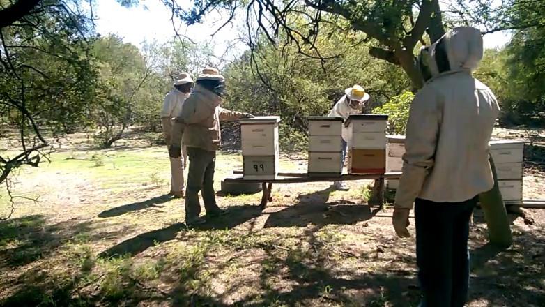 Arranca curso para formar a nuevos apicultores