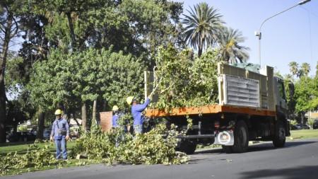 Continúan los trabajos de poda y recolección de ramas caídas en el Parque de Mayo