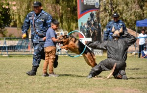 Las destrezas coparon la Muestra Anual de Canes y Montada