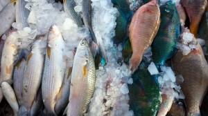 Recomendaciones para la venta y el consumo de pescado