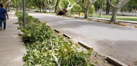Trabajan en el Parque de Mayo tras la caída de árboles y ramas