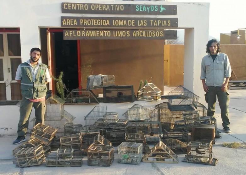En dos allanamientos, Ambiente secuestró más de 50 aves